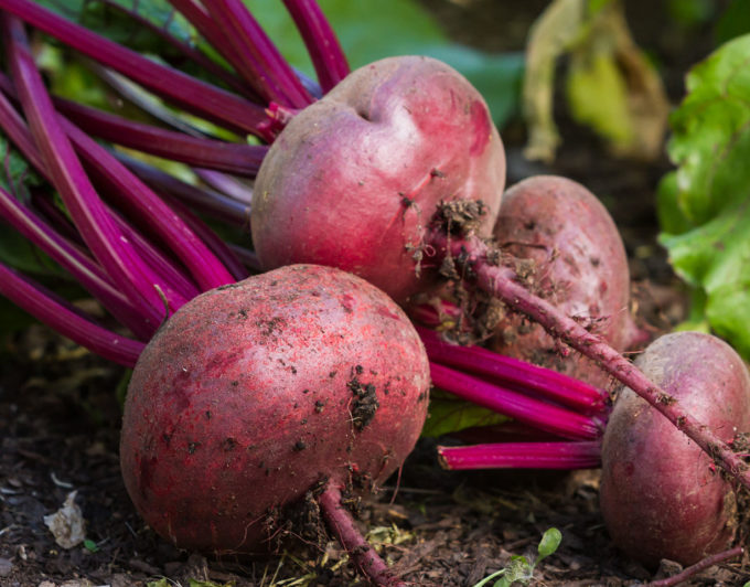 The Suprising Vegetables You Can Grown in Your Own Garden!